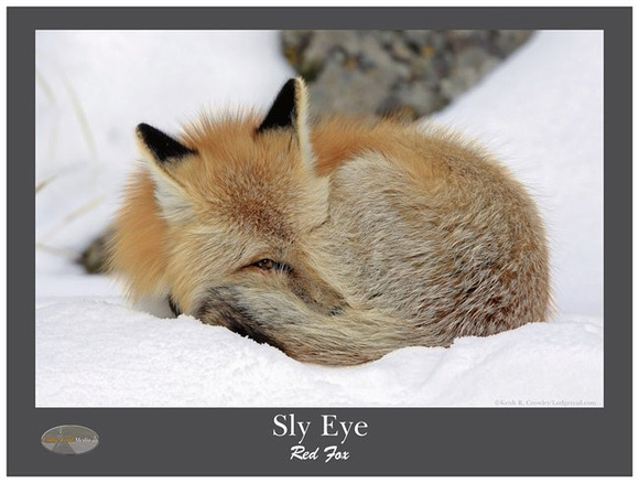 Sly Eye Poster 18x24""
